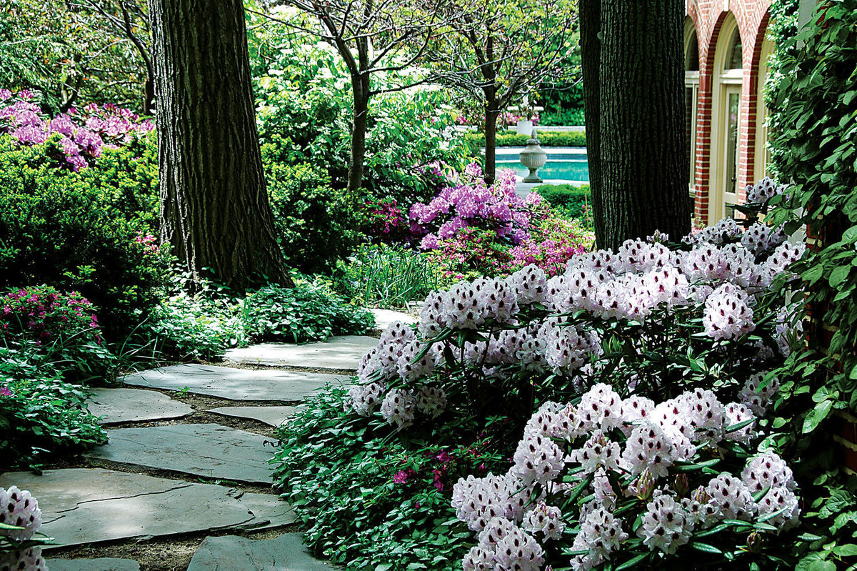 Landscaping Trees For Shade : Shade plants for gardening out of the sun