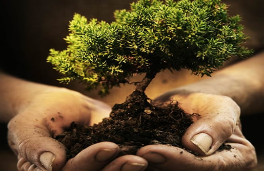 Tree planting guide bare root balled cuttings containers - Fir tree planting instructions a vigorous garden ...
