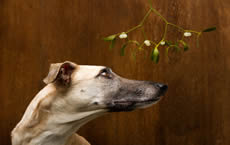 Many common plants are poisonous to dogs & cats