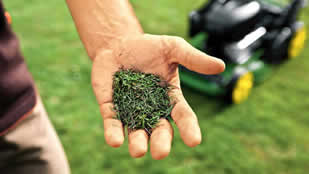 using grass clippings for mulching