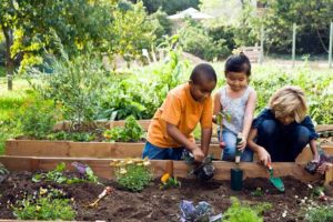raised beds tended by kids