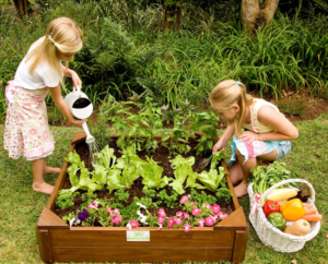 kids vegetable garden