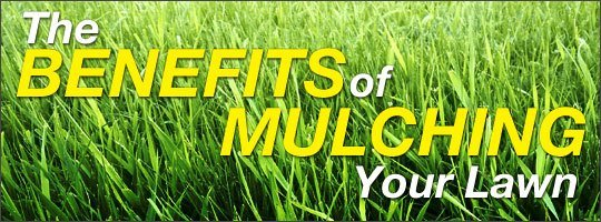 What are the benefits of mulching?