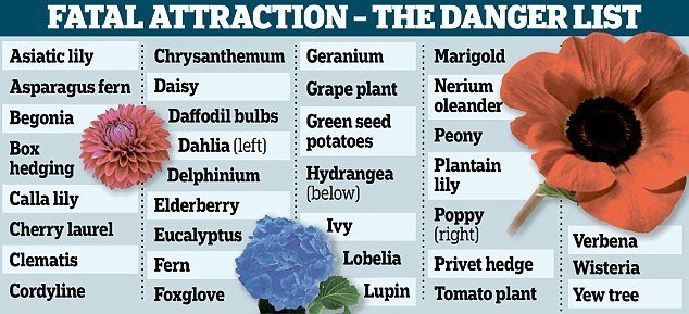 Plants that can kill your pet
