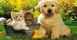 Look after your pets in the garden by being careful with the flowers you plant