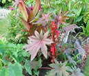 red castor bean plant is poisonous to pets
