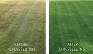 Overseeding before & after
