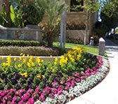 Commercially tended flowerbeds