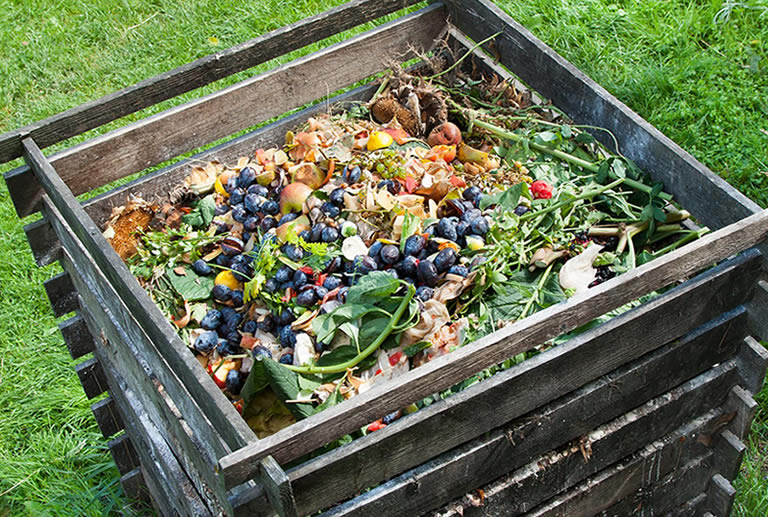 Compost with potatoes in it