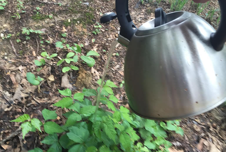 Pouring kettle boiled water on plant