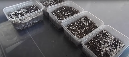 Containers for growing aloe plants from seeds